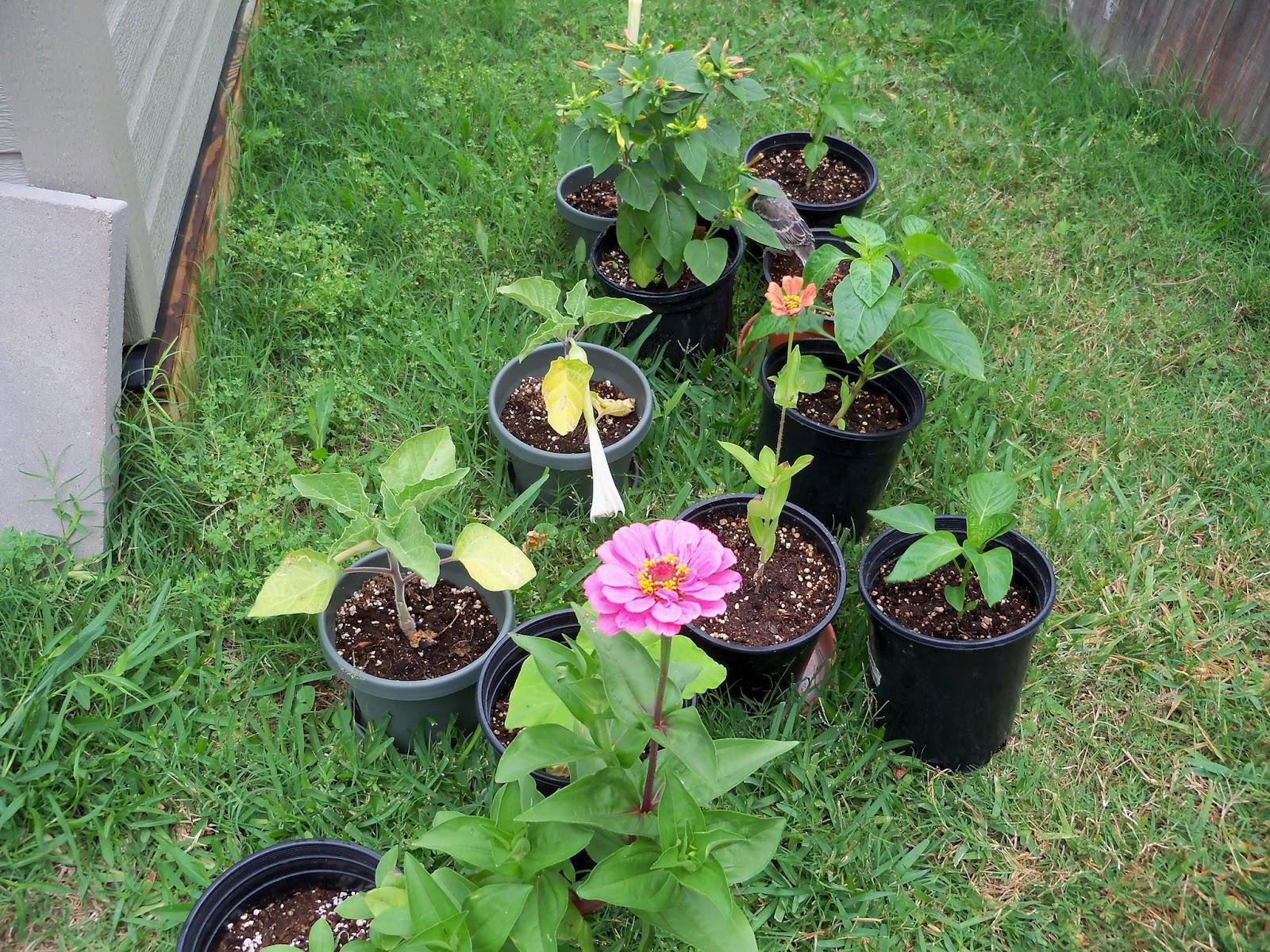 Gardening 2012 - 115_1952.JPG