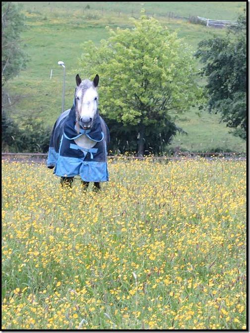 0722mellorhorse1