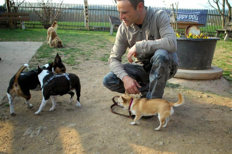 Kleinhundegruppe Mittwoch 17.30 Uhr - DSC_0014.JPG