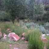 Kadzi Say (2200 m) : la végétation dans le vallon à proximité du camp, 14 juillet 2008. Photo : B. Lalanne-Cassou