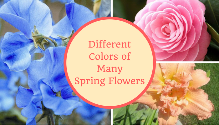 Different Colors of Many Spring Flowers