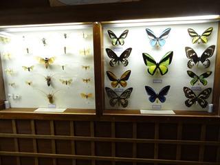 2016.03.14-011 papillons
