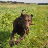 Survival voor Baas en Hond 2012 - DSC_0081.JPG
