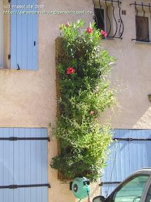 mur végétal suspendu mur vert à Cavalaire 83, le particulier autorise les visites Yves Grangier installé dans le Var Gassin, La Croix-Valmer
