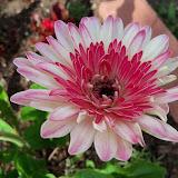 Gardening 2010 - 101_1003.JPG