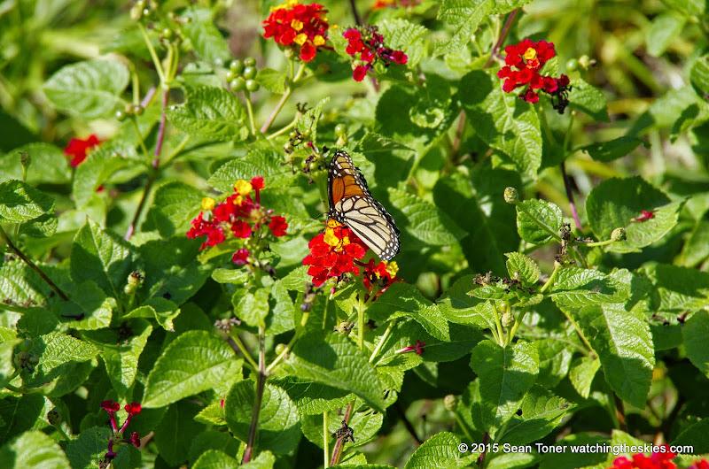10-26-14 Dallas Arboretum - _IGP4327.JPG