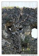 hrad-priroda