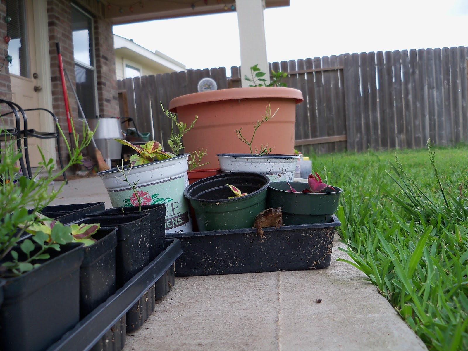 Gardening 2010, Part Two - 101_2473.JPG