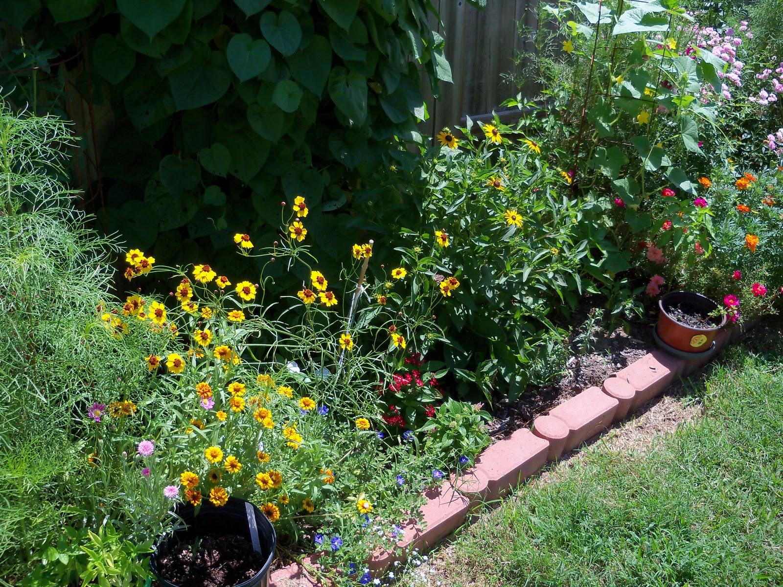 Gardening 2010, Part Three - 101_4418.JPG