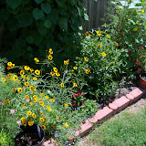 Gardening 2010, Part Three - 101_4418.JPG