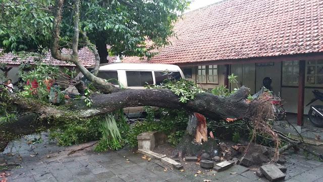 Komplek RSPD Klaten Diamuk Puting Beliung, Satu Mobil Tertimpa Pohon Flamboyan