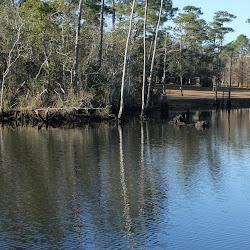 Fowl Marsh from Boat Feb3 2013 025
