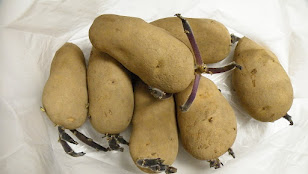 芽が出たジャガイモ1キロ
