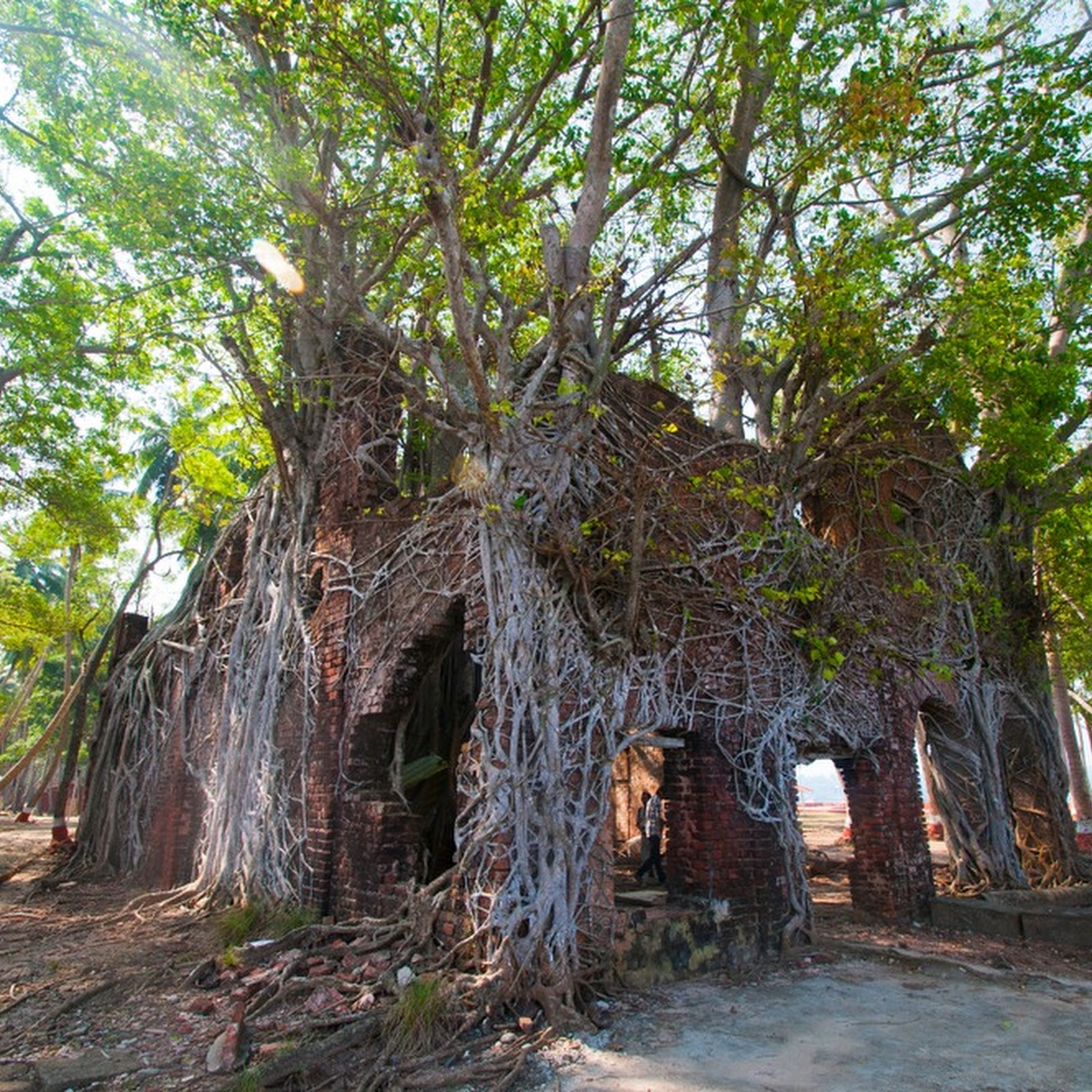 Ross Island: The Ghostly Ruins of a Former Penal Colony