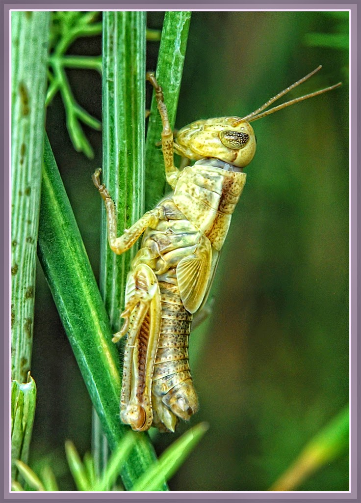 """Molted Hopper"" by Ardythe Wendt -- 2nd Place Digital Special A"