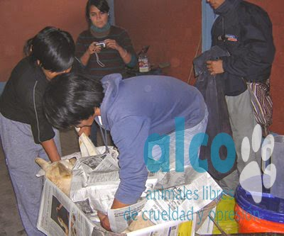 campaña de esterilizacion VES 2008
