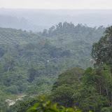 Déforestation et progression des palmiers à huile. Tunda Loma (Calderon, Esmeraldas), 8 décembre 2013. Photo : J.-M. Gayman