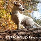 PIERRO ROLLEX.jpg