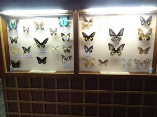 2016.03.14-005 papillons