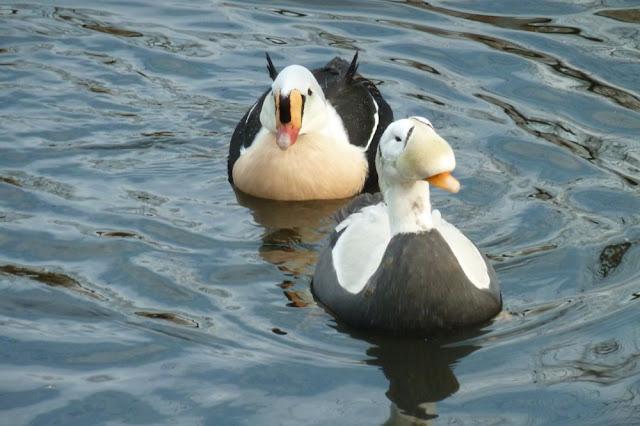 Livingston Ripley Waterfowl Conservancy - P1020576.JPG