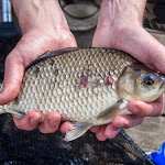 20150522_Fishing_Gorodyshche_043.jpg