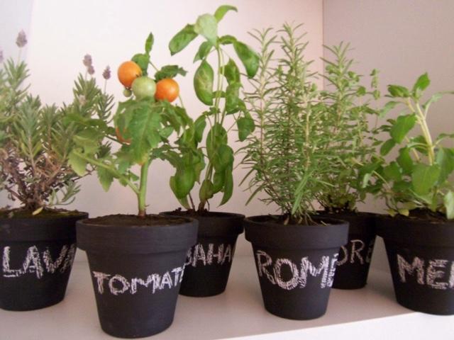 meu quintal meu jardim : meu quintal meu jardim:pimenta sol: Quero flores no meu jardim