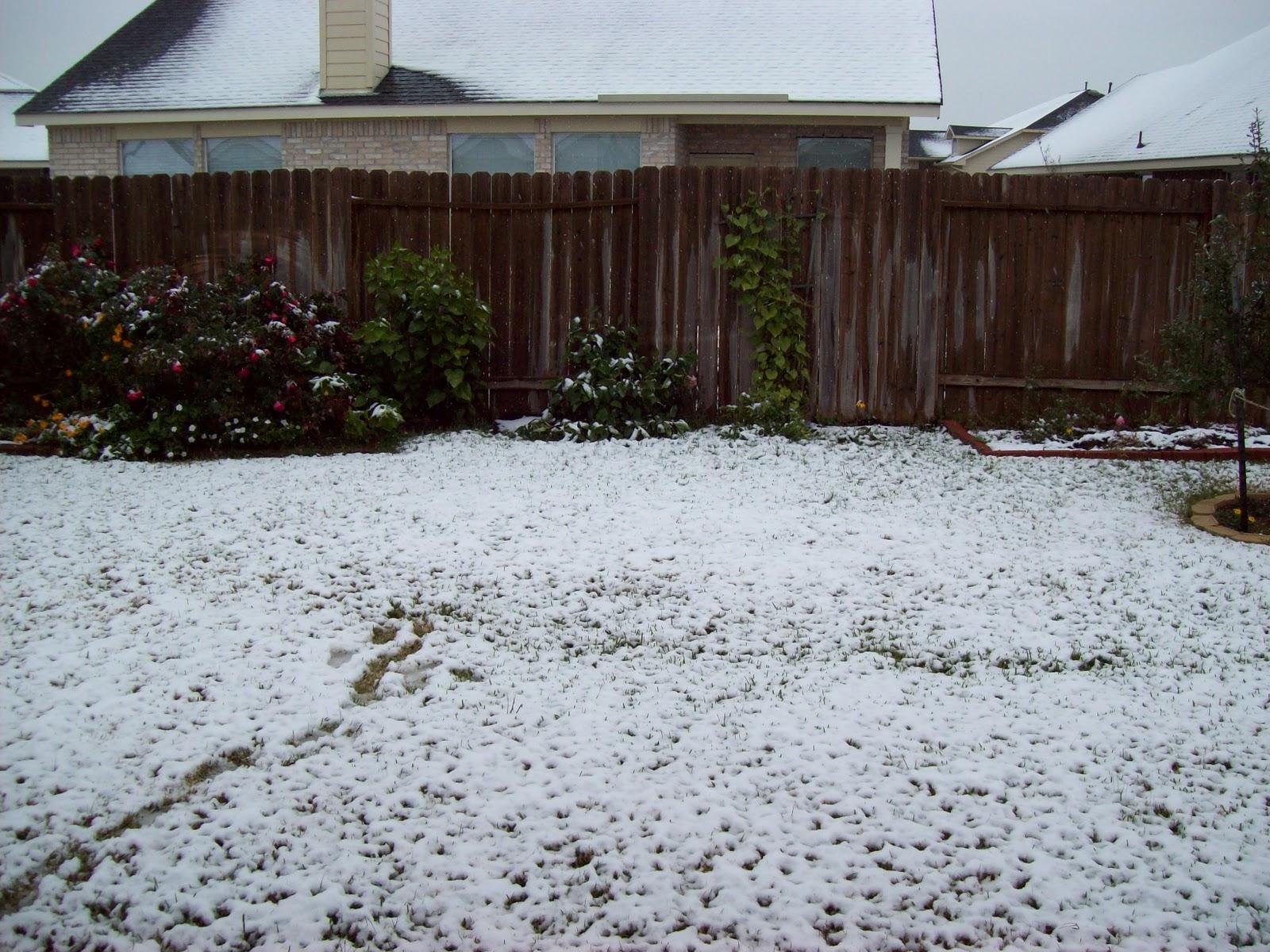Snow Day - 101_5972.JPG