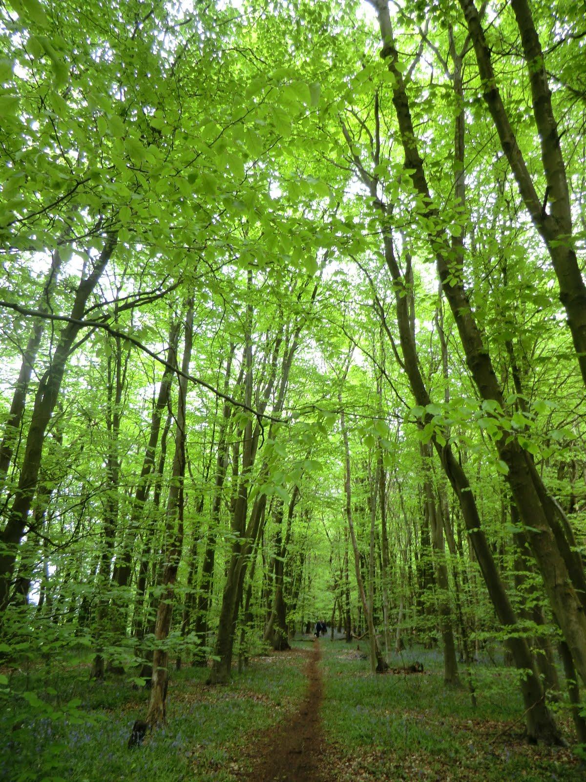 CIMG2931 Woodland path towards Westerham