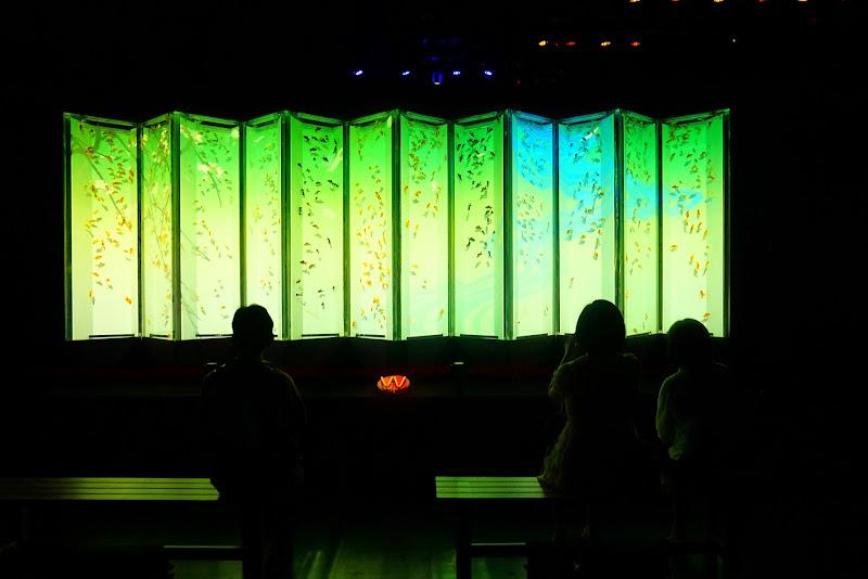 アートアクアリウム 日本橋 写真22