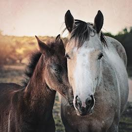 by Kelley Hurwitz Ahr - Animals Horses ( transition ranch )