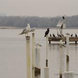 01-26-13 White Rock Lake - IMGP4367.JPG