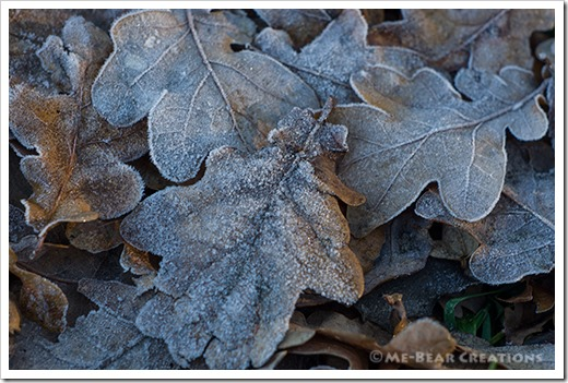 Frosted_leaves_01