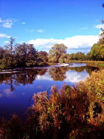 River Barrow Trees Carlow