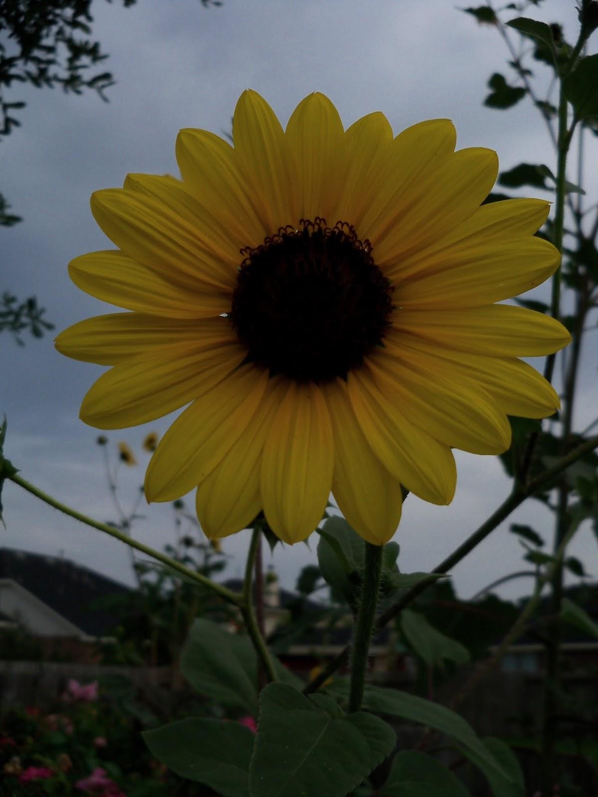 Gardening 2013 - 115_7246.JPG