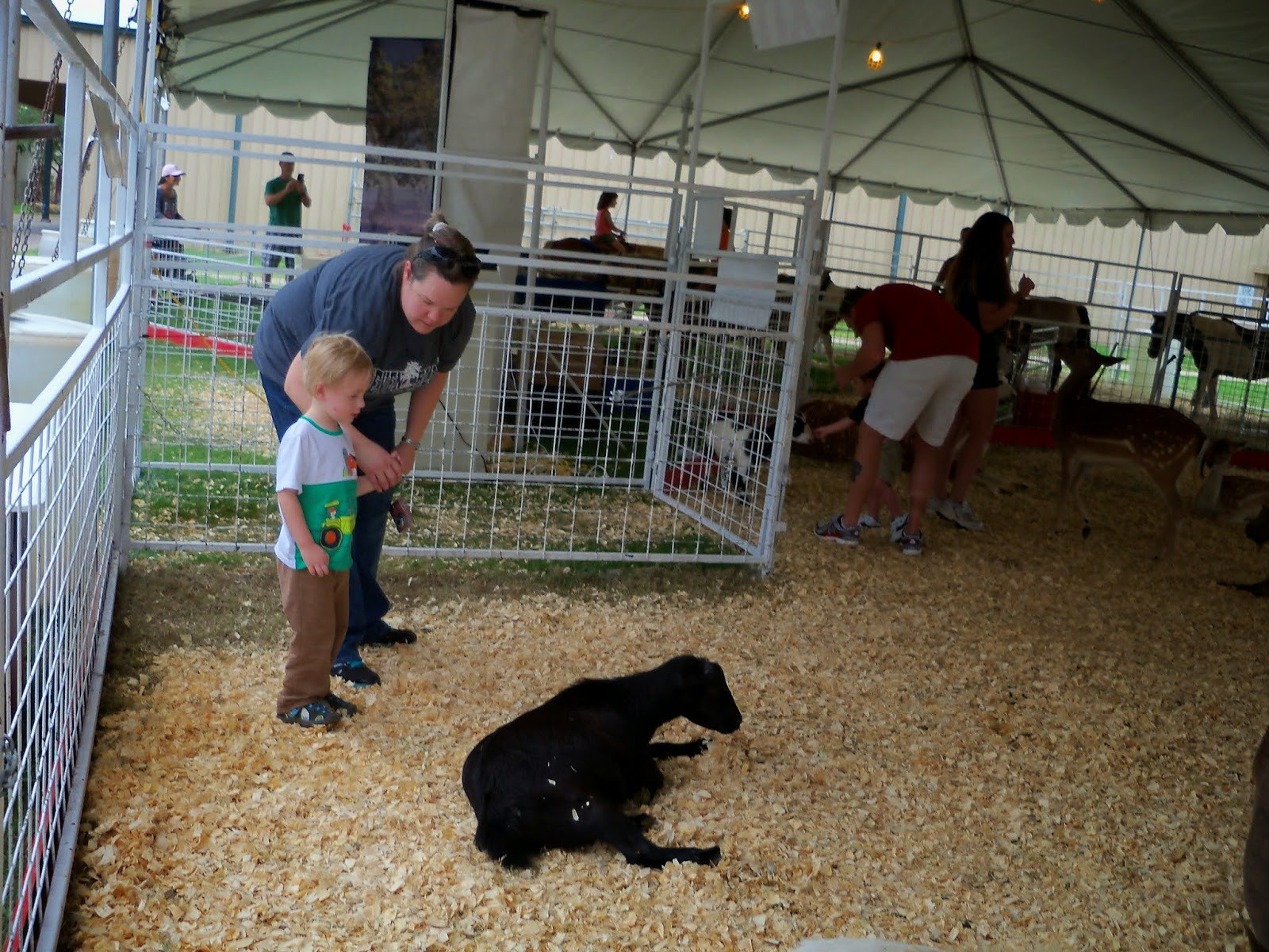 Fort Bend County Fair 2014 - 116_4268.JPG