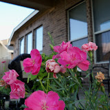 Gardening 2012 - 115_2338.JPG