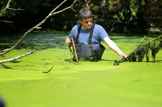 Pond Clearance - 17-07-2010 - pondamonium%2B%252815%2529.jpg