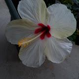 Gardening 2010 - 101_1556.JPG