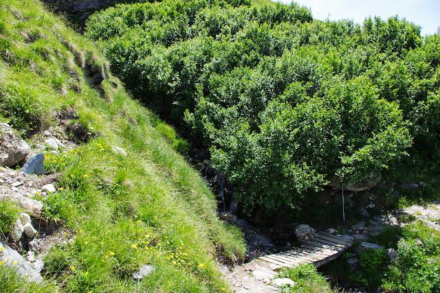 Val de Fex : lieu de passage de Parnassius sacerdos (P. phoebus). Fex Curtins, 2100 m (Engadine, Grisons, CH), 12 juillet 2013. Photo : J.-M. Gayman