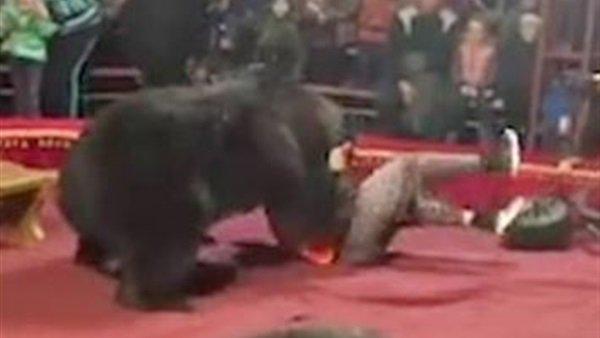 هجوم دب مسعور على مدربه في سيرك روسي شاهد..ردة فعل غريبة من الجمهور