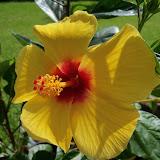Gardening 2010, Part Three - 101_4988.JPG
