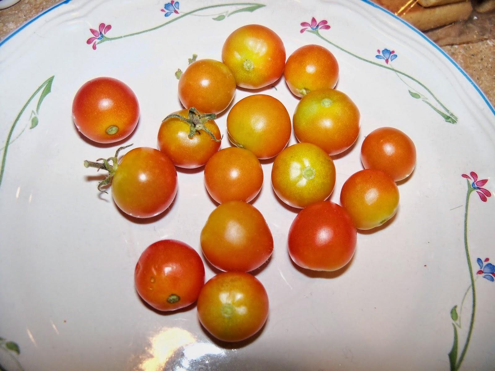 Gardening 2014 - 116_3309.JPG
