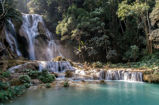 фауна Лаоса