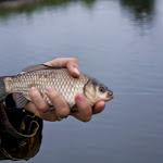 20140615_Fishing_Velikiy_Oleksyn_009.jpg