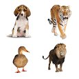Kids Learn Animals Sounds & Animals English Names