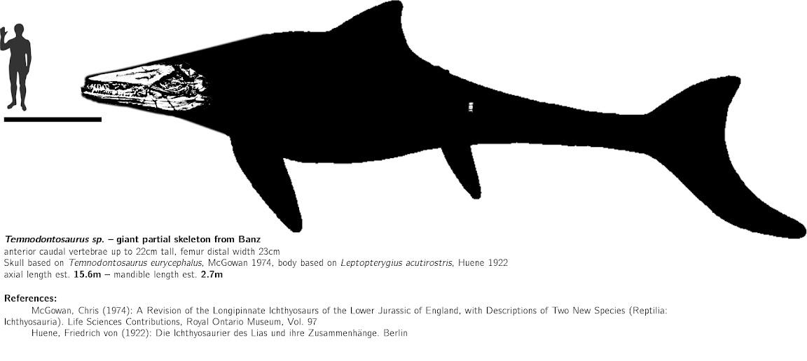 https://lh3.googleusercontent.com/-CK1MZAXASZA/VavBj4id3cI/AAAAAAAADl8/svMYptiJ_2c/s1152-Ic42/Temnodontosauridae_indet.jpg