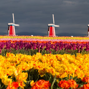 Windmill Garden by Debbie Slocum Lockwood - Flowers Flower Gardens (  )