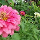 Gardening 2011 - 100_8108.JPG