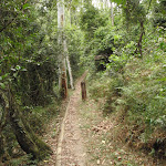 Waterman Walk track (226483)