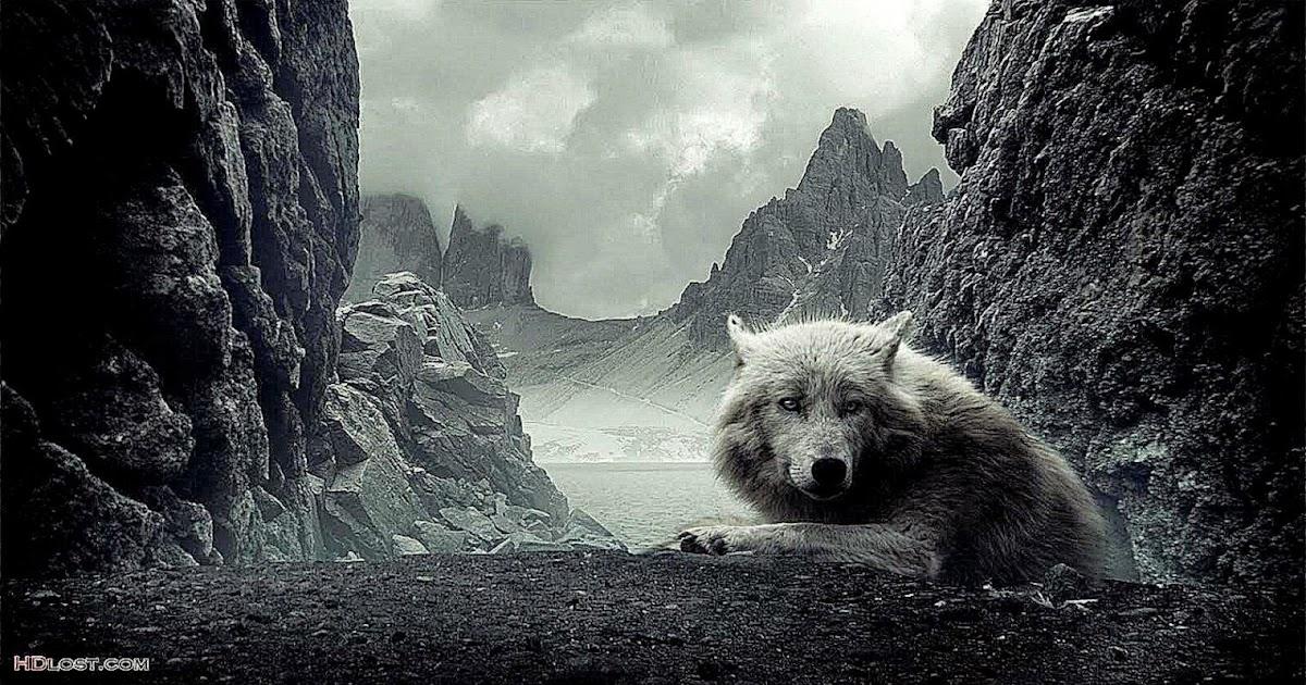 Dark Wolf Hd Wallpaper